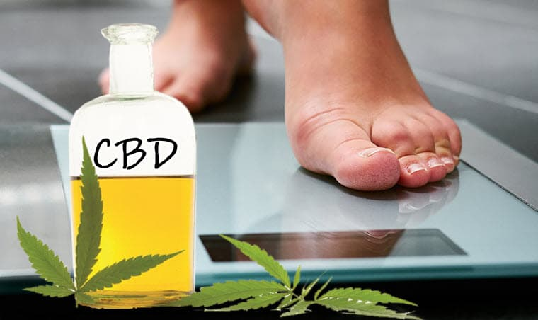 CBD Affect Your Weight